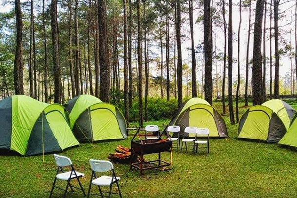 Camping Orchid Forest